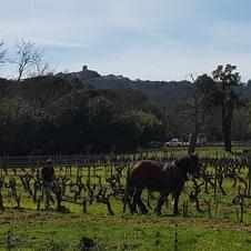 Petit train des vignes en escale à Barbeyrolles