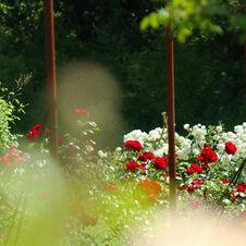 Rouge & Blanc Le Jardin de Gassin Office de tourisme de Gassin http://gassin.eu/